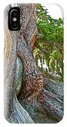 Bristlecone Pine On Ramparts Trail In Cedar Breaks National Monument-utah  IPhone Case