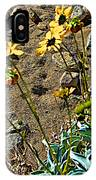 Brittlebush On Borrego Palm Canyon Trail In Anza-borrego Desert Sp-ca IPhone Case