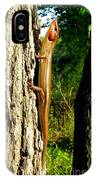 Broad Headed Skink IPhone X Case