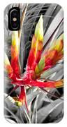 Bromeliad 1 IPhone Case