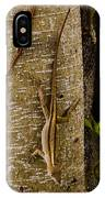 Brown Anole Lizard In Florida IPhone Case