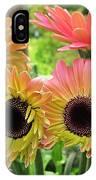 Brown Eyed Gerbera Daisies IPhone Case