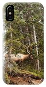 Bull Elk Stands Guard IPhone Case