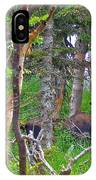 Bull Moose In Cape Breton Highlands Np-ns IPhone Case