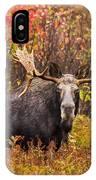 Bull Moose IPhone Case