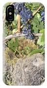 Bunches Of Red Wine Grapes Growing On Vine IPhone Case
