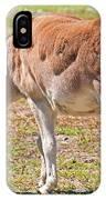 Burro Equus Asinus IPhone Case