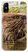 Busy As A Beaver IPhone Case