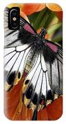 Butterfly 006 IPhone Case