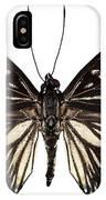 Butterfly Species Euripus Nyctelius Euploeoides  IPhone Case