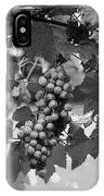 Bw Hanging Thompson Grapes Sultana Poster Look IPhone Case