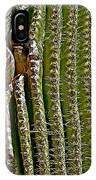 Cactus Wren With Offspring In A Saguaro Cactus In Tucson Sonoran Desert Museum-arizona IPhone Case