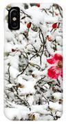 Cape Cod Beach Rose In Fresh Snow IPhone Case