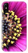 Cape Daisy Close Up IPhone Case