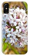 Capitate Valerian Near Savage River Cabin In Denali Np-ak IPhone Case