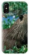 Capybara And Jacana IPhone Case