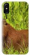 Capybara And Smooth Billed Ani IPhone Case