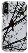 Cardinal Amongst The Branches IPhone Case