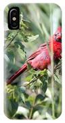 Cardinal In Bush I IPhone Case