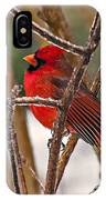Cardinal On A Winter Day IPhone Case