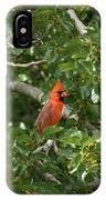 Cardinal Posing IPhone Case