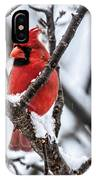 Cardinal Snow Scene IPhone Case