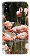 Caribbean Flamingos - Phoenicopterus Ruber Ruber IPhone Case