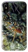 Caribbean Reef Lobster On Night Dive IPhone Case