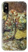 Caribbean Reef Octopus IIi IPhone Case