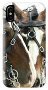 Carriage Horse - 3 IPhone Case