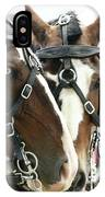 Carriage Horse - 4 IPhone Case