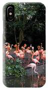 Cartoon - Flamingos In Their Exhibit Along With A Small Lake In The Jurong Bird Park IPhone Case