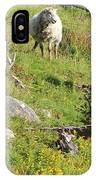 Cautious Sheep In The Pasture IPhone Case