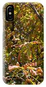 Cchestnut Tree In Autumn IPhone Case