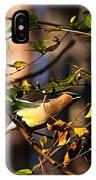 Cedar Waxwing Preparing To Fly IPhone Case