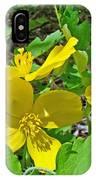 Celandine Poppy Or Wood Poppy - Stylophorum Diphyllum IPhone Case