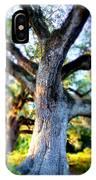 Charleston Grand Oak At Sunset IPhone Case