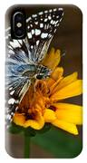 Checkered Skipper Square IPhone Case