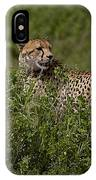 Cheetah   #0089 IPhone Case