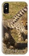 Cheetah Juveniles Playing IPhone Case
