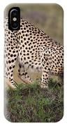 Cheetah On Termite Mound IPhone Case