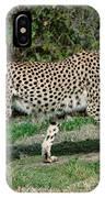 Cheetah Strolling IPhone Case