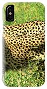 Cheetahs Running IPhone Case