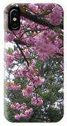 Cherry Blossoms 1 IPhone Case