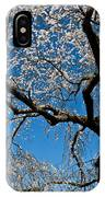 Cherry Blossoms And Sky IPhone Case