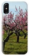 Cherry Trees IPhone Case