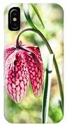 chess-flower in the gardens of Enkoping spring 2012 IPhone Case