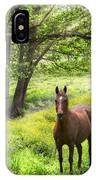Chestnut Horse In A Sunny Meadow IPhone Case