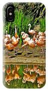 Chilean Flamingo Reflection In San Diego Zoo Safari Park In Escondido-california IPhone Case