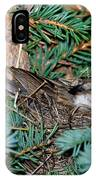 Chipping Sparrow On Nest IPhone Case